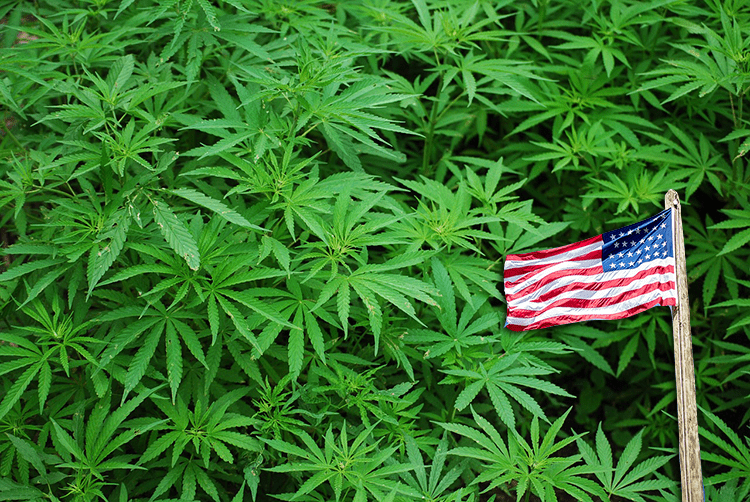 What Jeff Sessions Means For Marijuana in Colorado