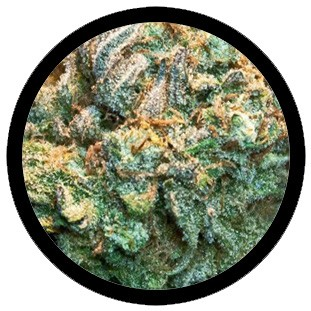 Blue Lotus Marijuana Strain